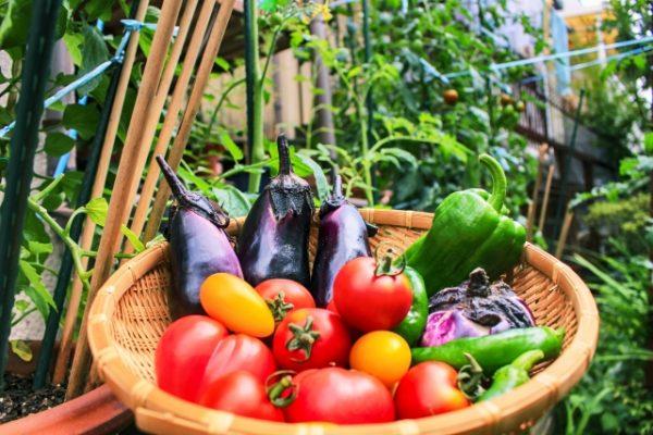 食欲を抑えて体重減少を促す14の食べ物